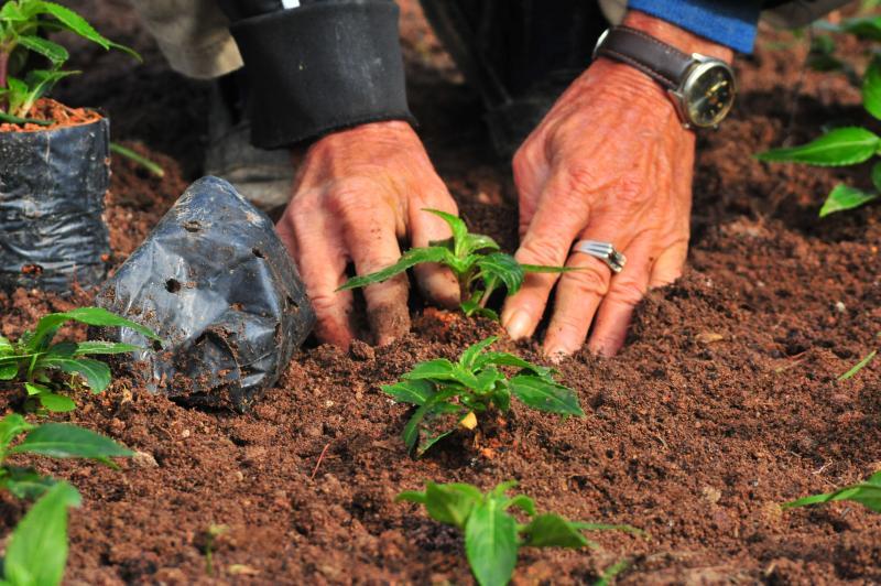 Dia da árvore será celebrado com plantio comunitário e doação de mudas nativas em Itajaí